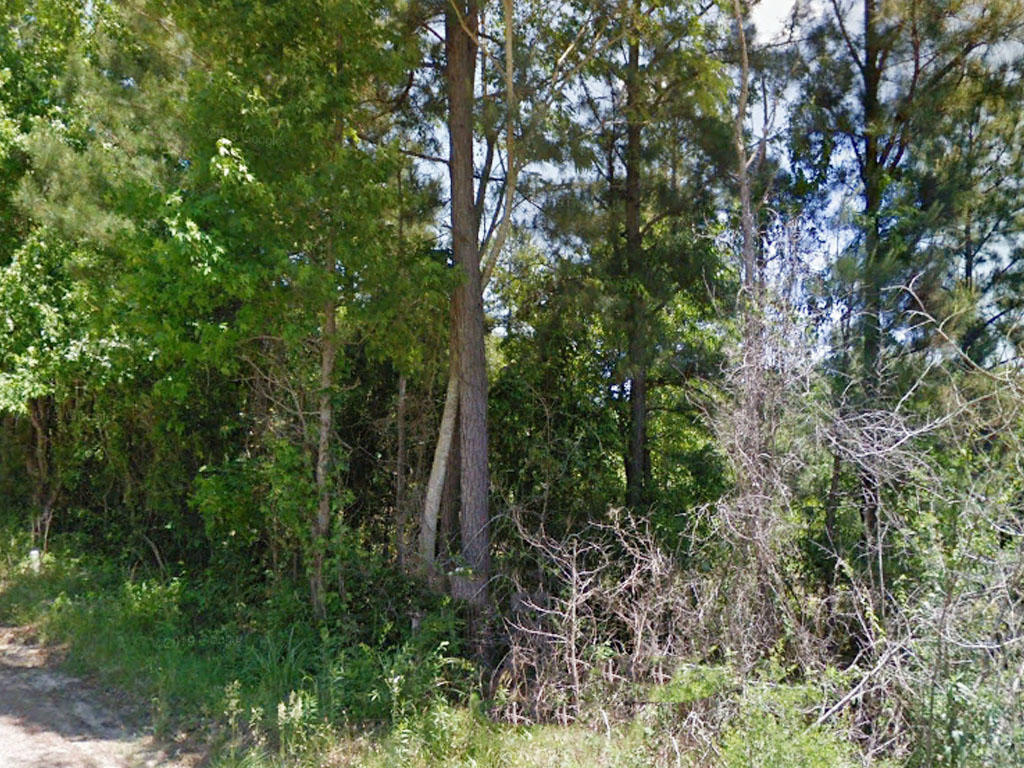 Spacious 1 Acre Lot in Affordable Area - Image 3
