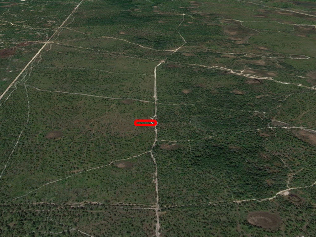 Secluded 1 Acre in Rural Florida - Image 2