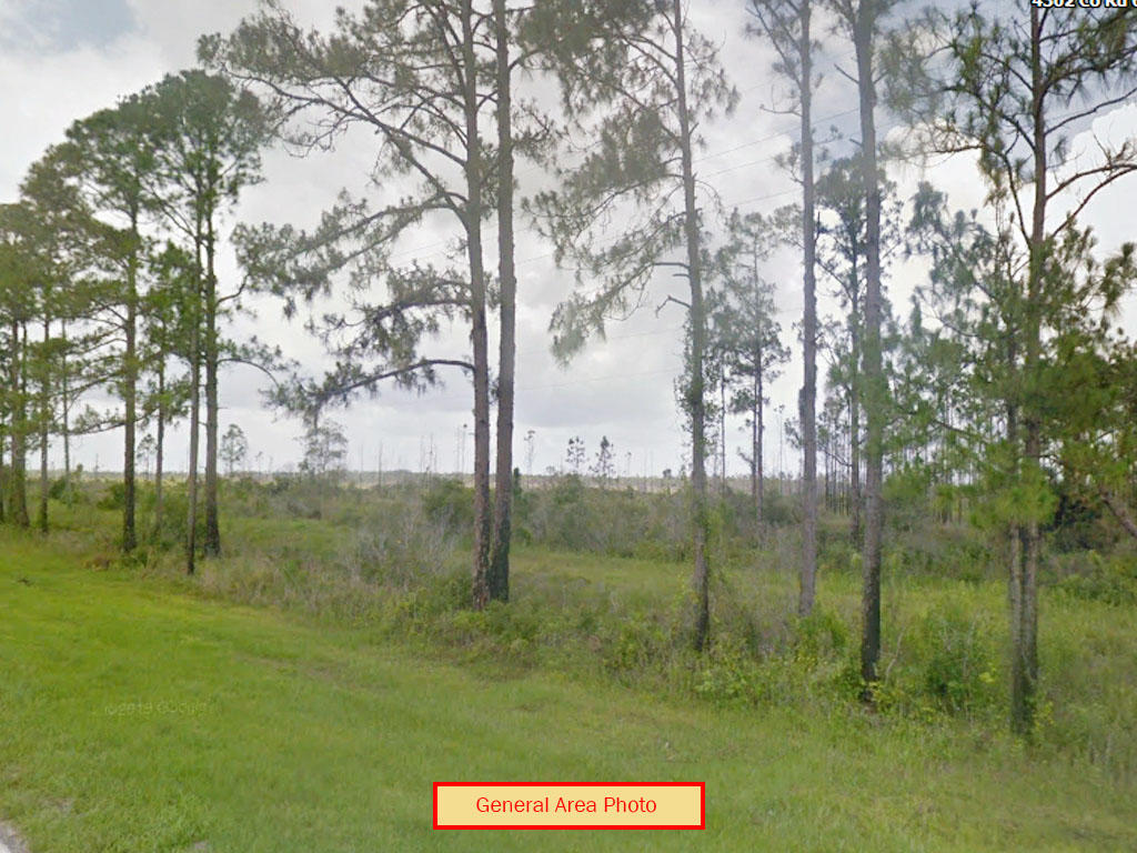 Secluded 1 Acre in Rural Florida - Image 3
