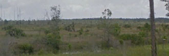 Secluded 1 Acre in Rural Florida
