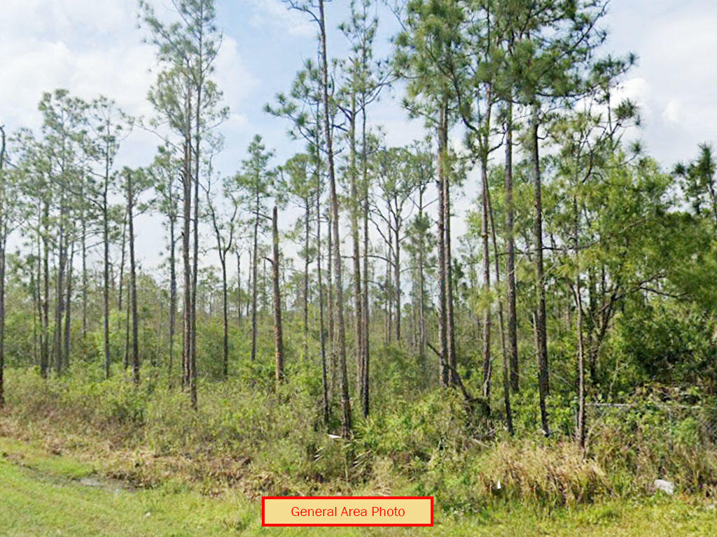 Secluded 1 Acre in Rural Florida - Image 0