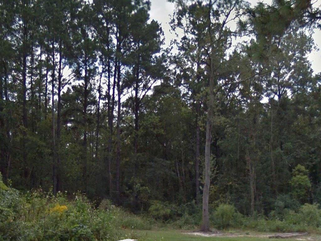 Beautiful land with trees next to established Waycross neighborhood - Image 0
