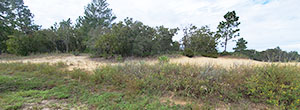 Sandy Quarter Acre Lot in Citrus Springs