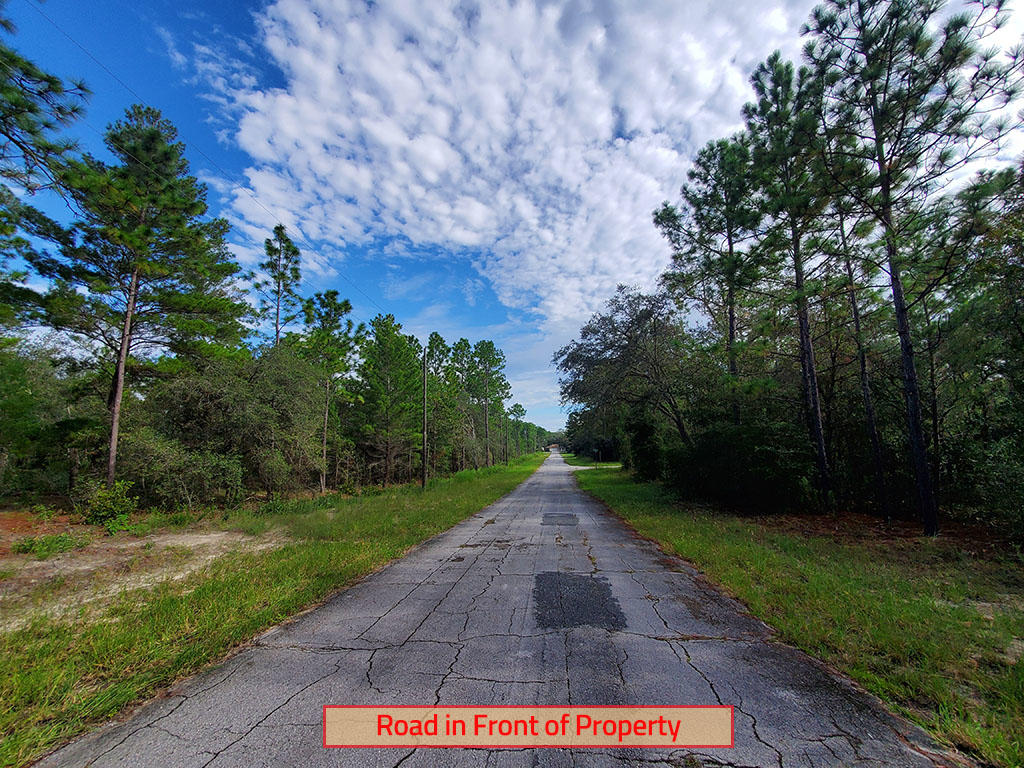 Nearly a Quarter acre in Citrus Springs - Image 4