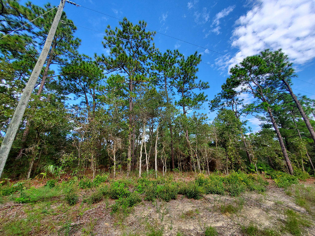 Nearly a Quarter acre in Citrus Springs - Image 0