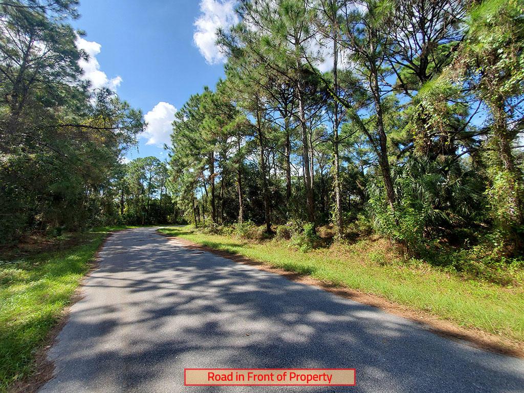 Wooded Quarter Acre Near Port Charlotte - Image 4