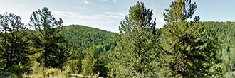 Rugged Mountain Land Near Charming Community