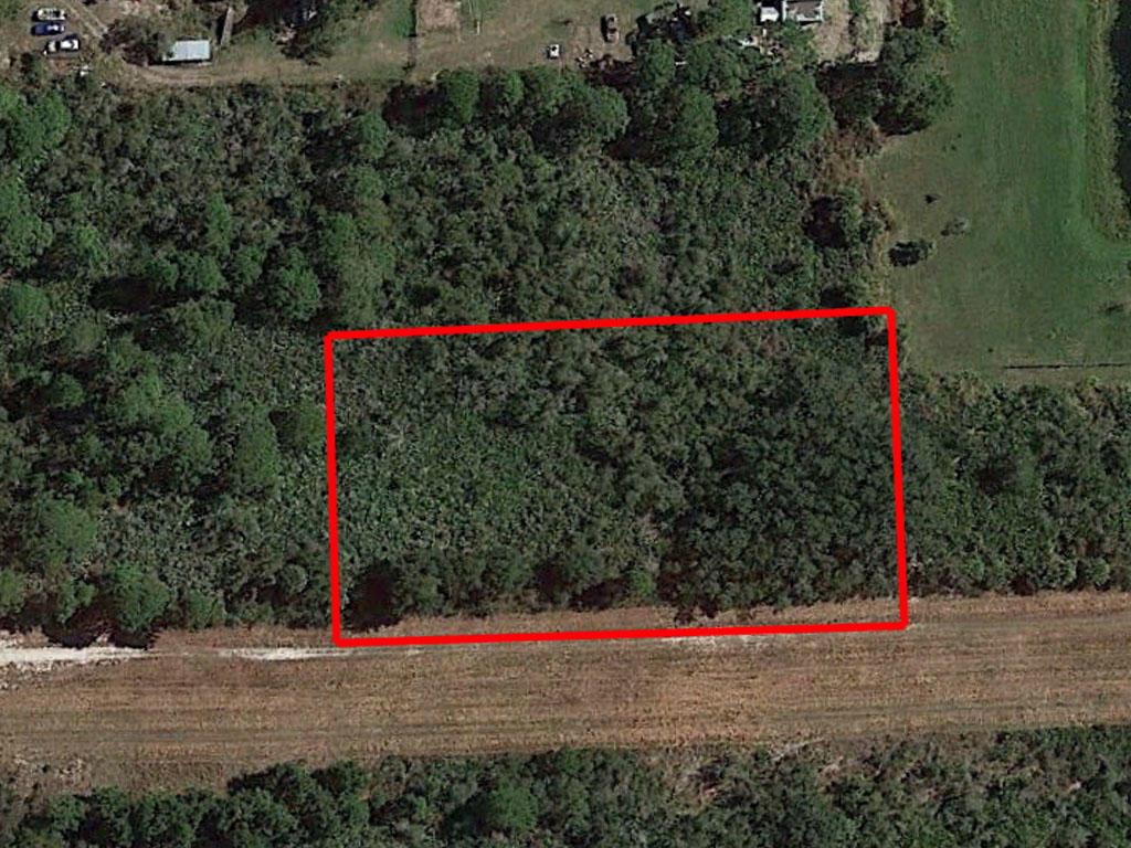 Beautiful Land Investment Under Florida Skies - Image 1