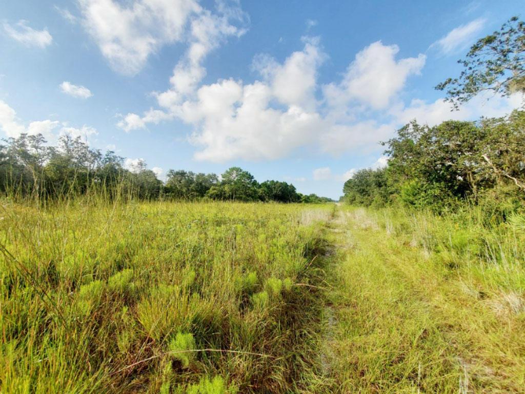 Beautiful Land Investment Under Florida Skies - Image 3