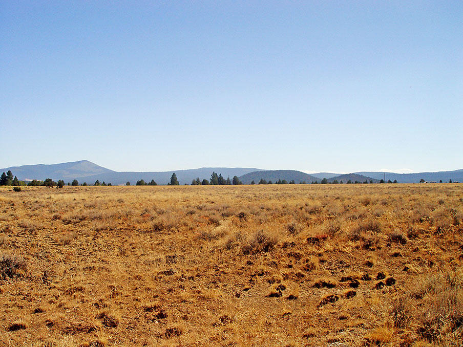 Remote 20 Acres in Southern Oregon with Access 1/3 of a mile away - Image 3