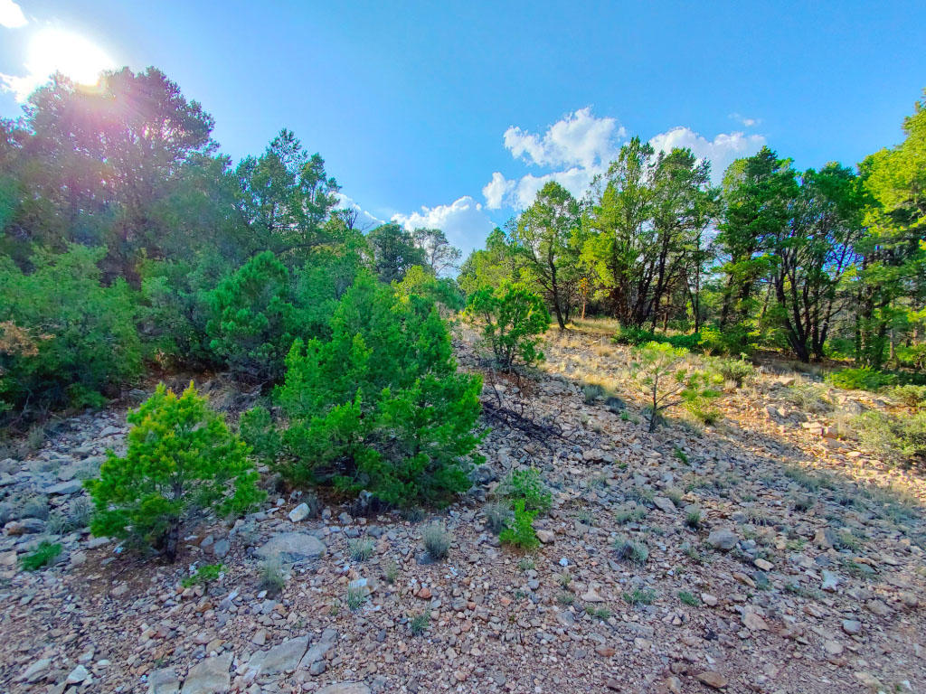 Beautiful Half Acre in Land of Enchantment - Image 3