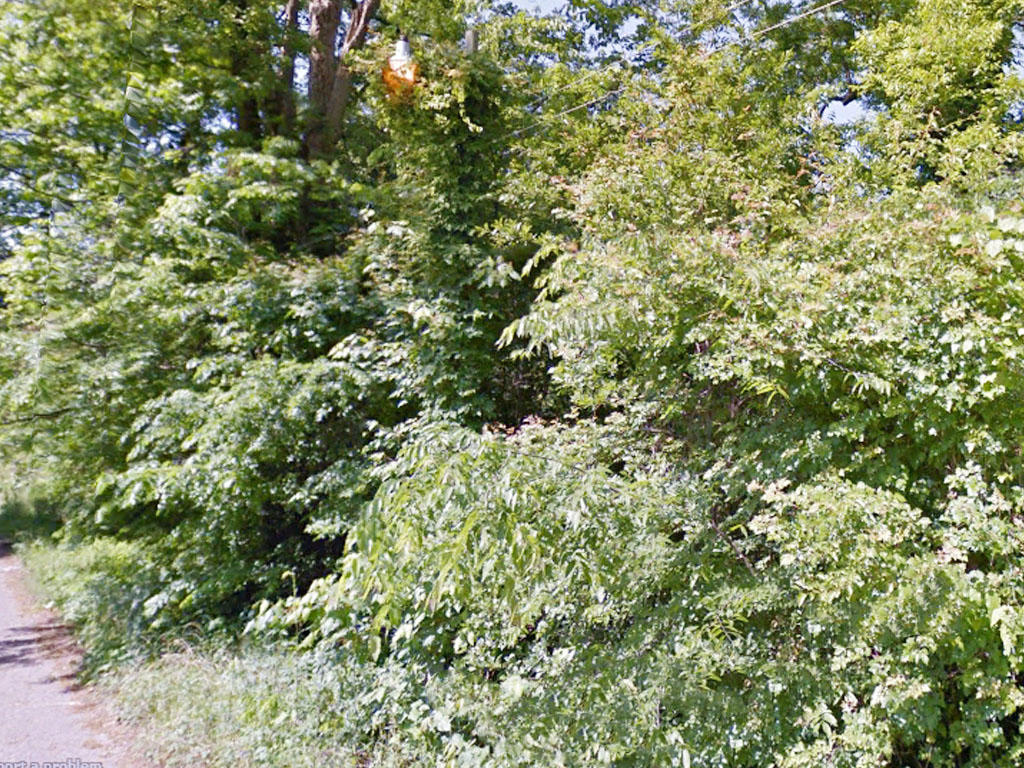 Treed Residential Lot Near Mississippi River - Image 3