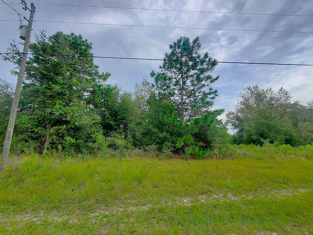 1.25 acres outside of charming Gainesville, Florida - Image 3