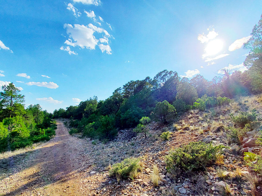 Beautiful Half Acre in Land of Enchantment - Image 0