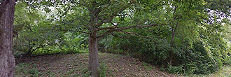 Stunning Flat Lot With Tree Cover in a Well Established Area