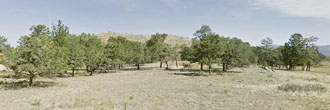 2.5 Acre Colorado Agricultural Getaway with Short Term Camping OK