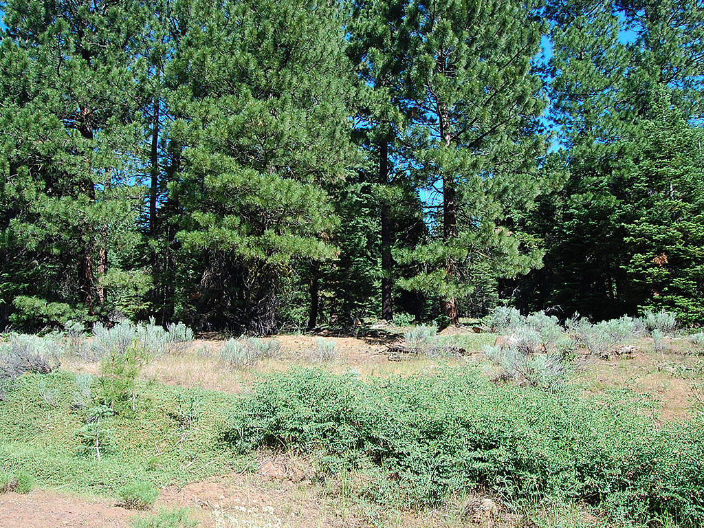 One Acre Parcel in California Pines - Image 3