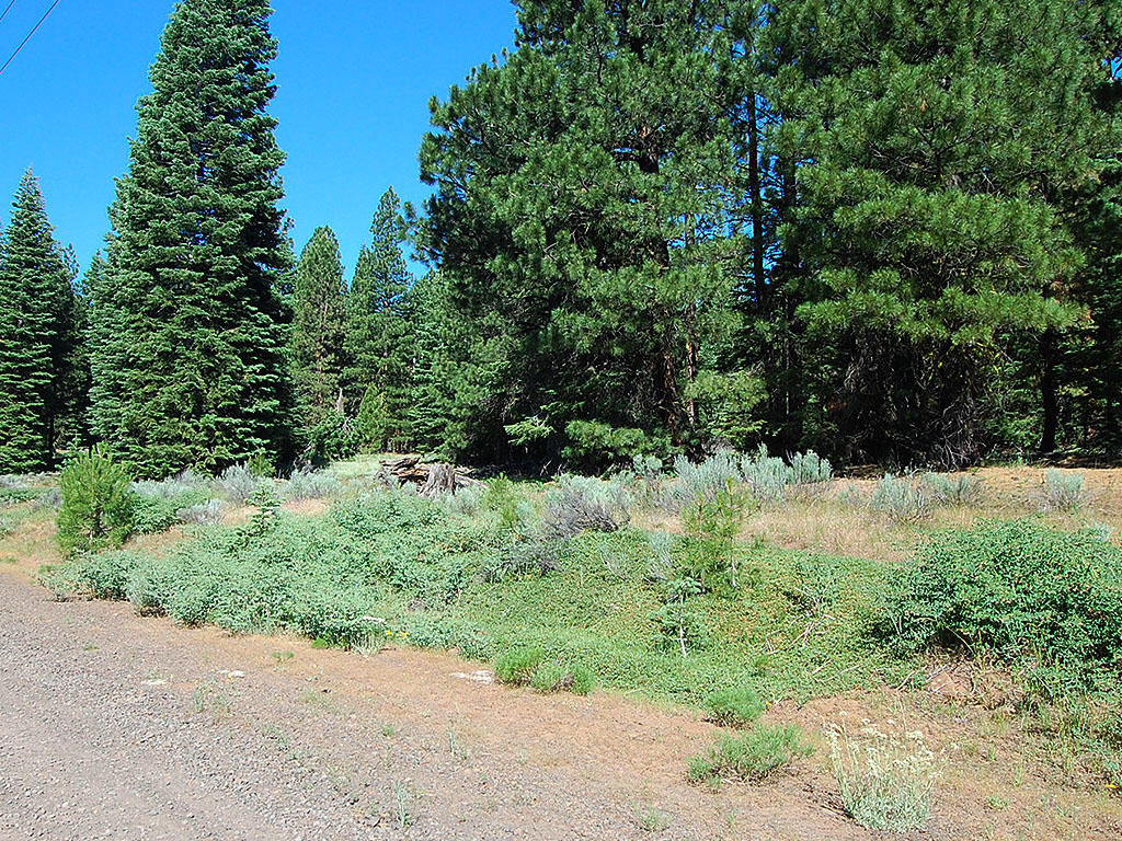One Acre Parcel in California Pines - Image 0