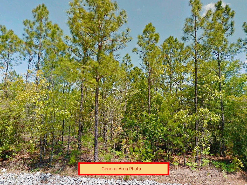 One Third of an Acre in Defuniak Springs - Image 3