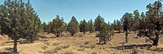 Gorgeous 3 Acre Lot in Modoc County