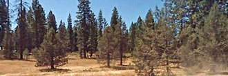 Gorgeous 1 Acre for Tranquil Living