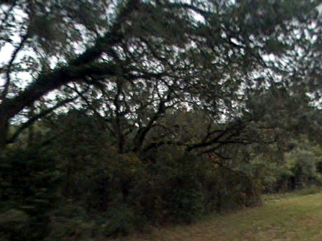 Escape to Over Three Acres in Northern Florida - Image 3