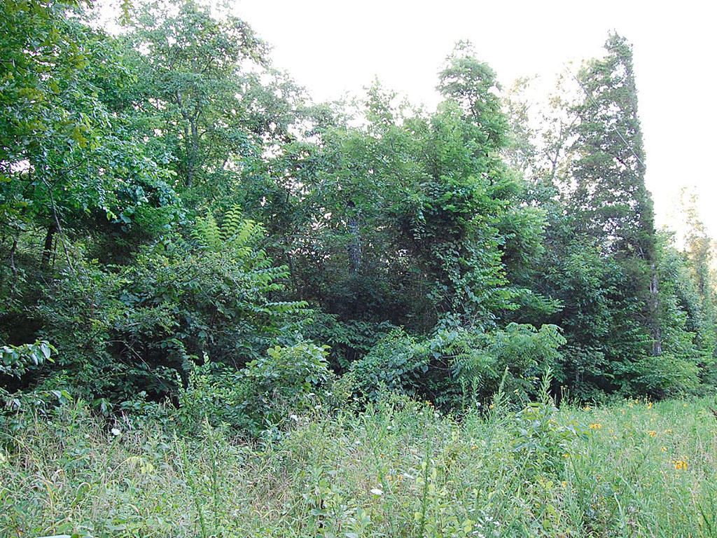 Prime Double Lot in Sharp County Arkansas - Image 3