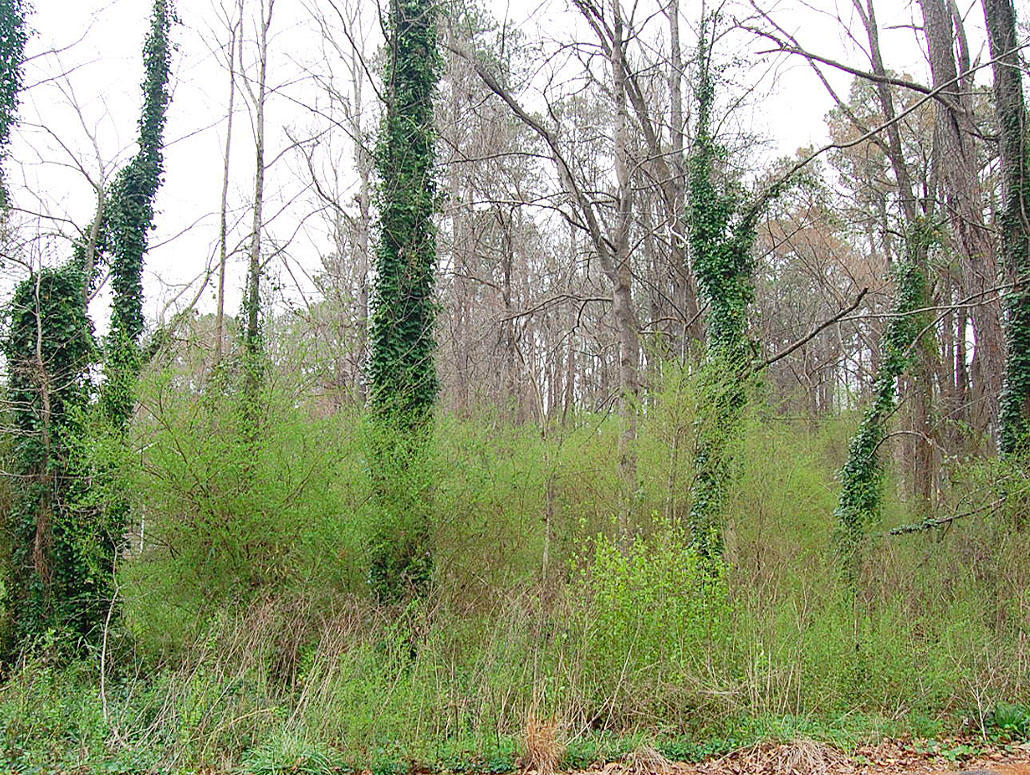 Nearly an acre in Peachtree City - Image 0