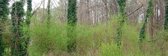 Nearly an acre in Peachtree City