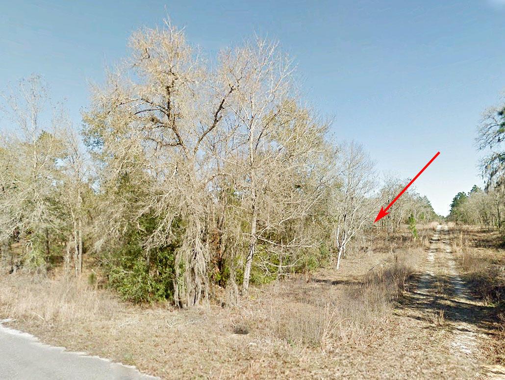 Rectangular Quarter Acre in Rural Florida - Image 0