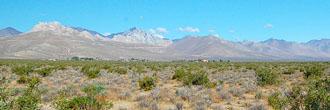 Five Acre Desert Beauty