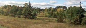 18 Acres of Pure Minnesota Land