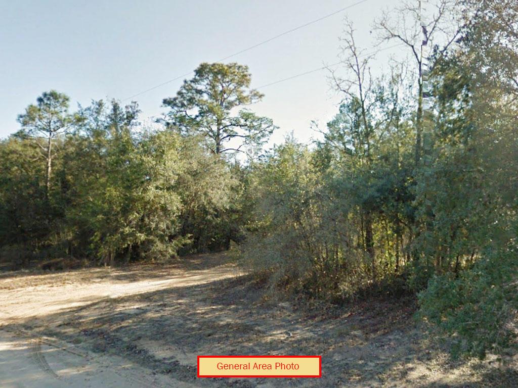 Near Half Acre in Sunshine State - Image 3