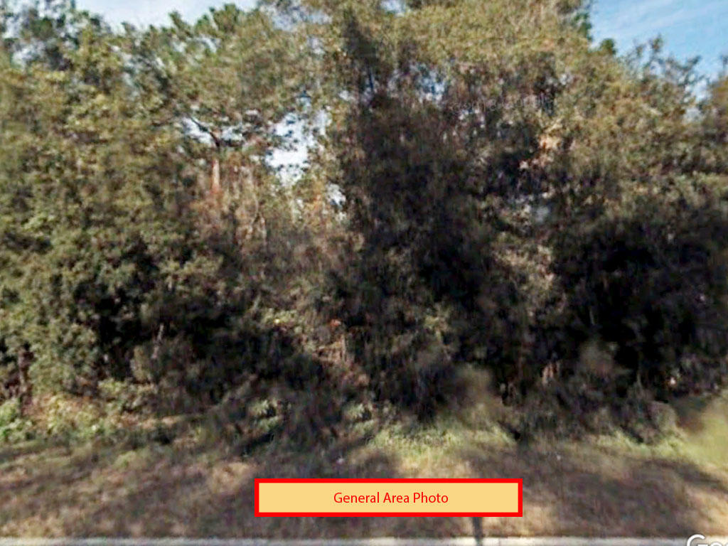 Over an acre in sunny Florida - Image 3