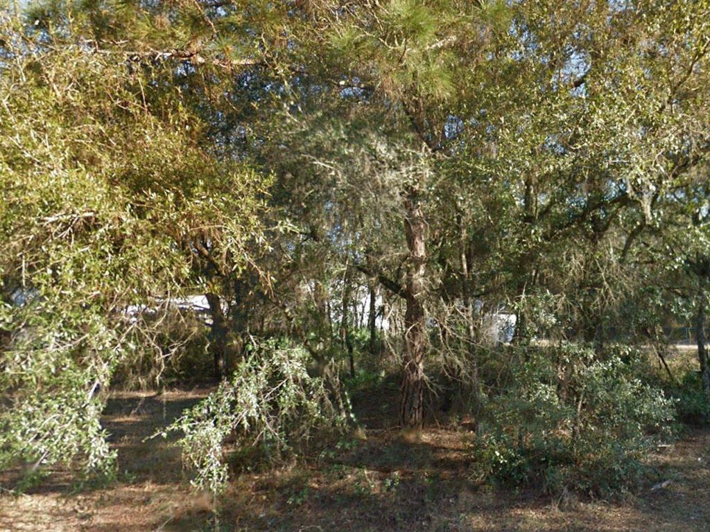 A quarter an acre close to the lake - Image 0