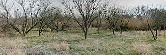 Over a quarter acre in O'Brien Texas