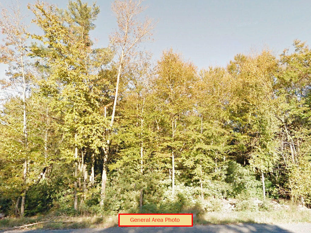 Beautiful 1.25 Acre Tree Covered Lot at the End of A Cul-de-sac - Image 6