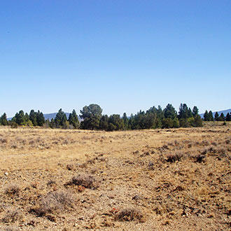 Remote 20 Acres in Southern Oregon with Access 1/3 of a mile away - Image 0