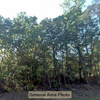Attractive Rural Acreage only 20 Minutes from Lake City - Image 1