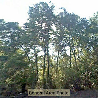 Attractive Rural Acreage only 20 Minutes from Lake City - Image 2