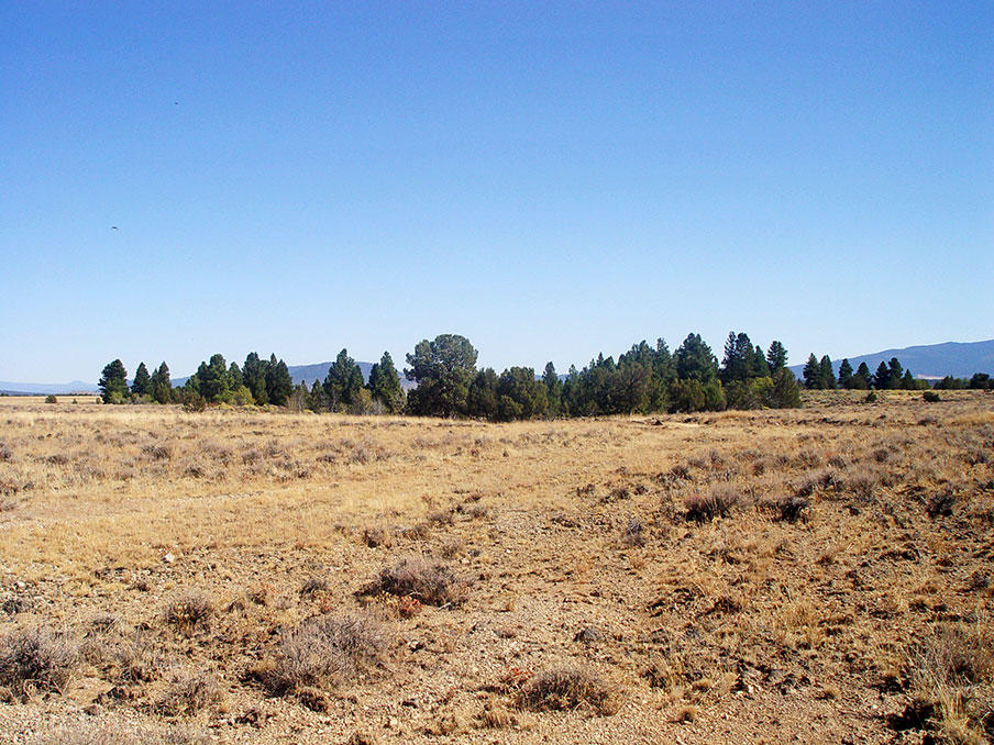Remote 20 Acres in Southern Oregon with Access 1/3 of a mile away - Image 5