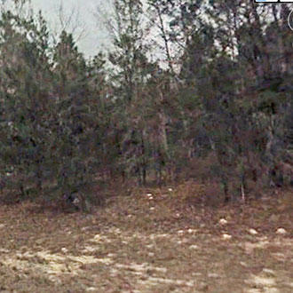Great Lot, Over Half an Acre on Paved Road Near Marion Oaks - Image 2