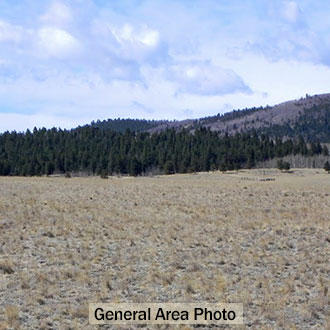 4+ Acres 12 Miles South of Hartsel Colorado - Image 1