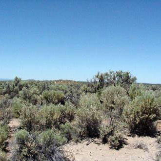 20 Acre Retreat 20 Minutes from Christmas Valley - Image 5