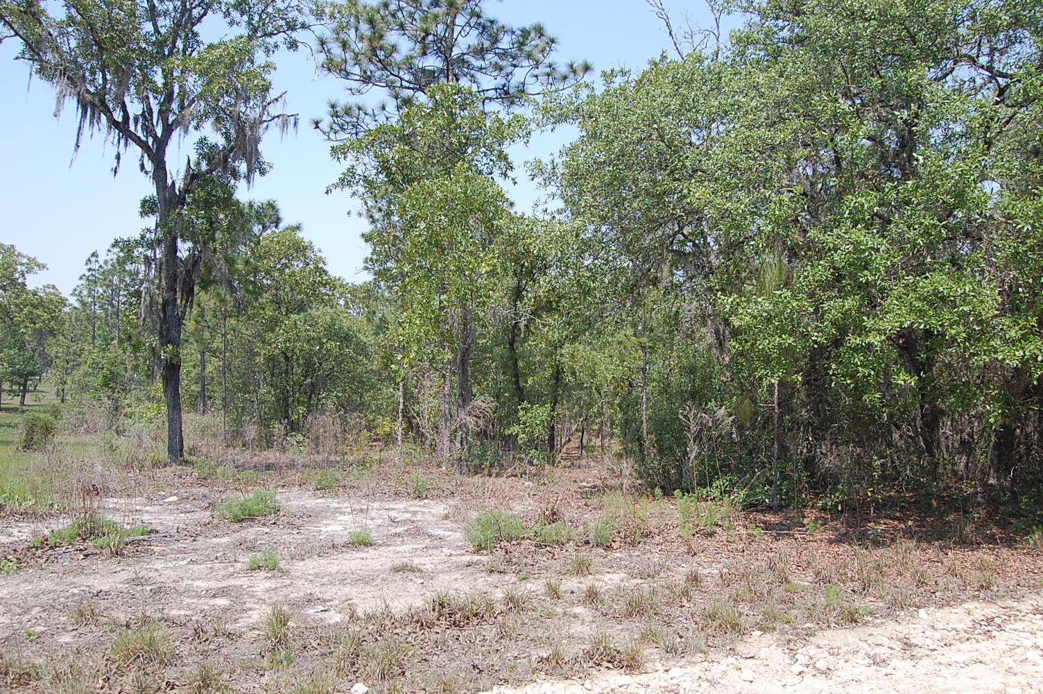 1.25 Acre Property About 45 Minutes SW of Gainesville - Image 1