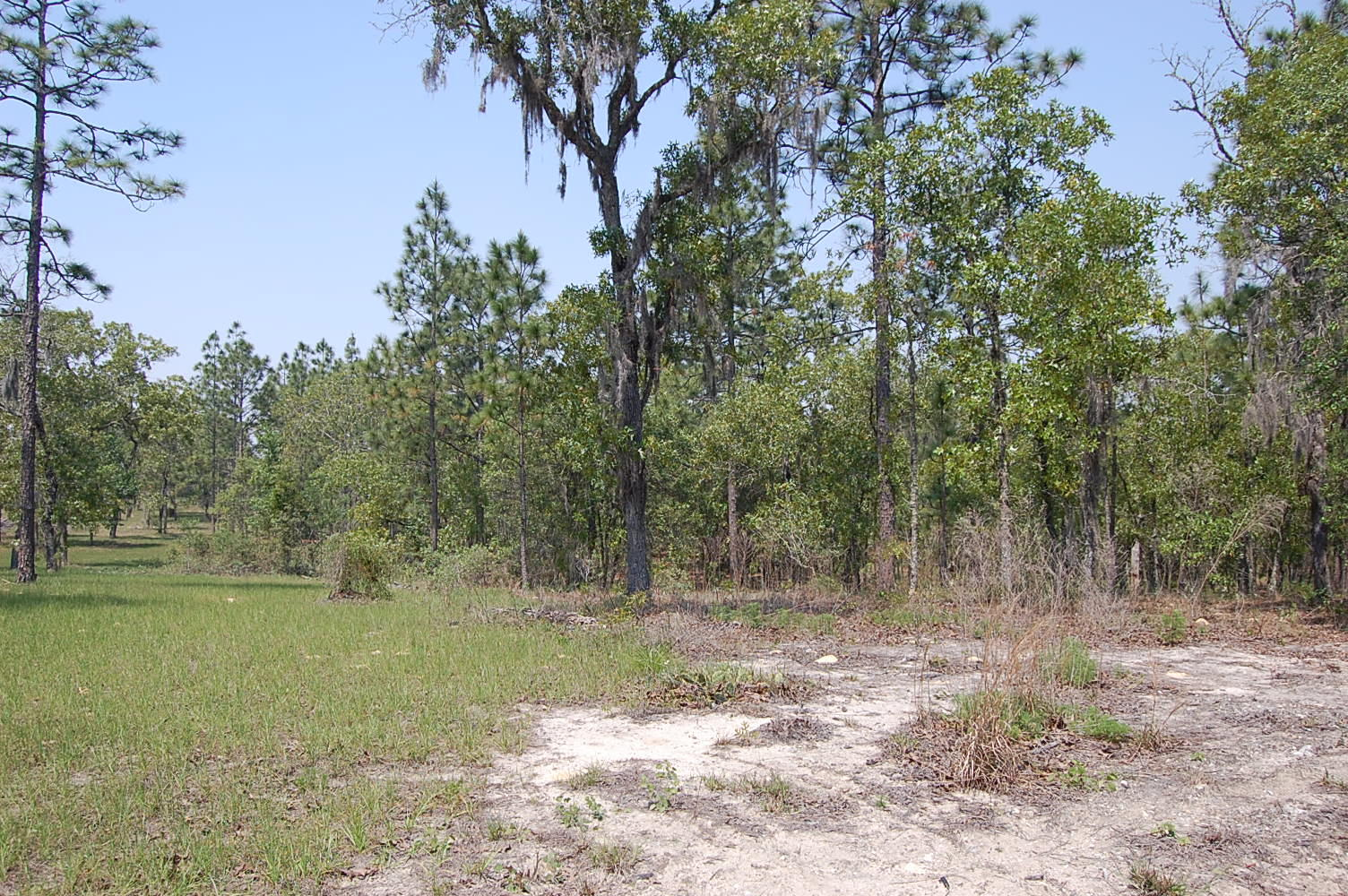 1.25 Acre Property About 45 Minutes SW of Gainesville - Image 0