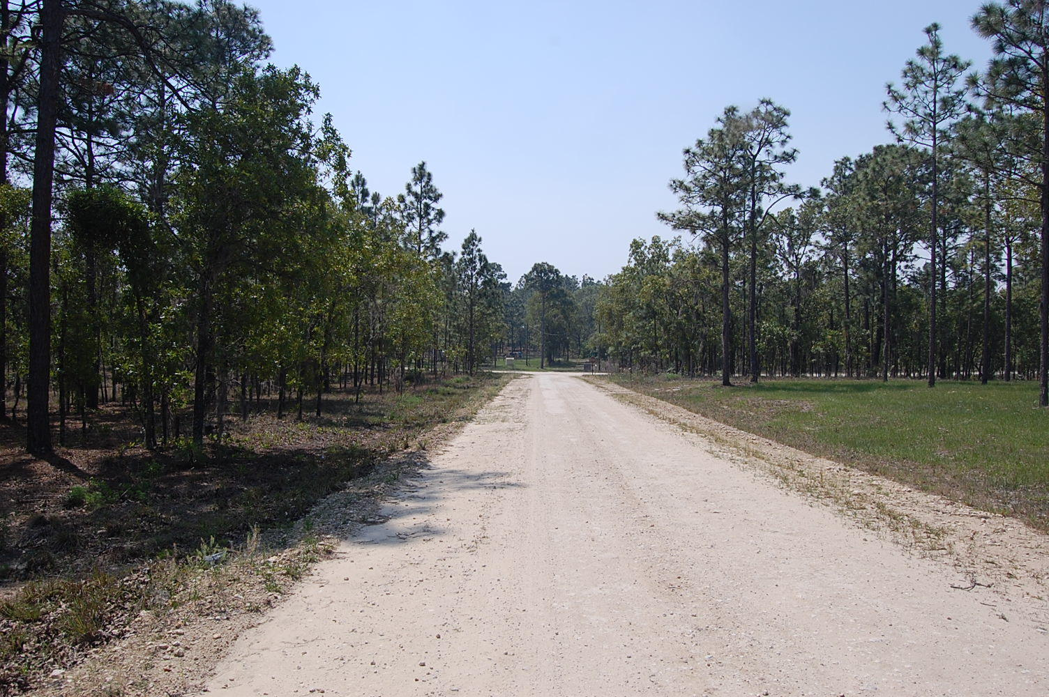 1.25 Acre Property About 45 Minutes SW of Gainesville - Image 3