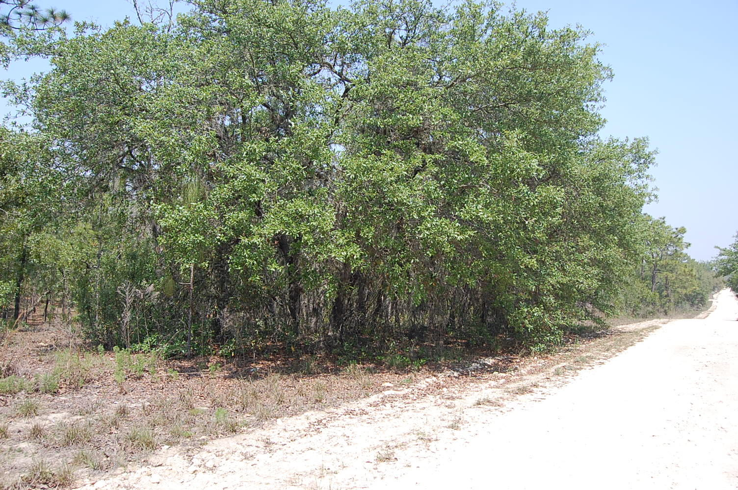 1.25 Acre Property About 45 Minutes SW of Gainesville - Image 4