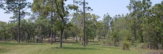 1.25 Acre Property About 45 Minutes SW of Gainesville
