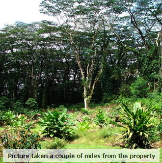 Hawaiian Residential Land Half an Hour from Hilo - Image 2